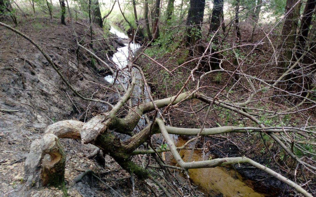 Miłośnicy czystych lasów