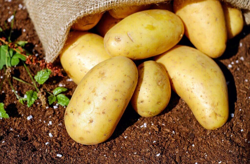Królestwo ziemniaka