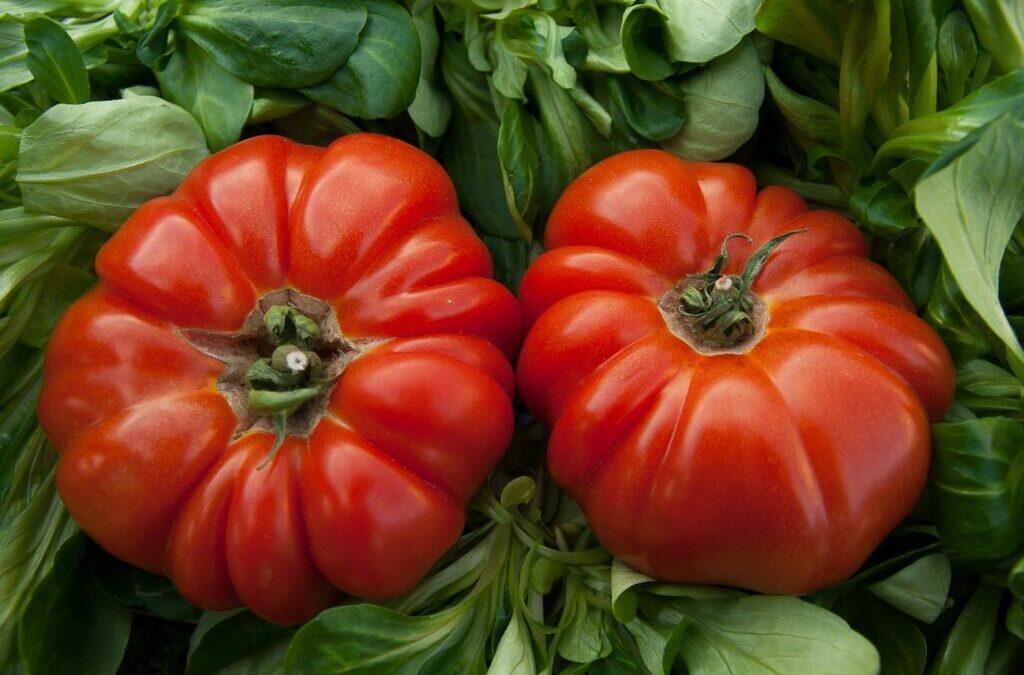 Sezon pomidorowy